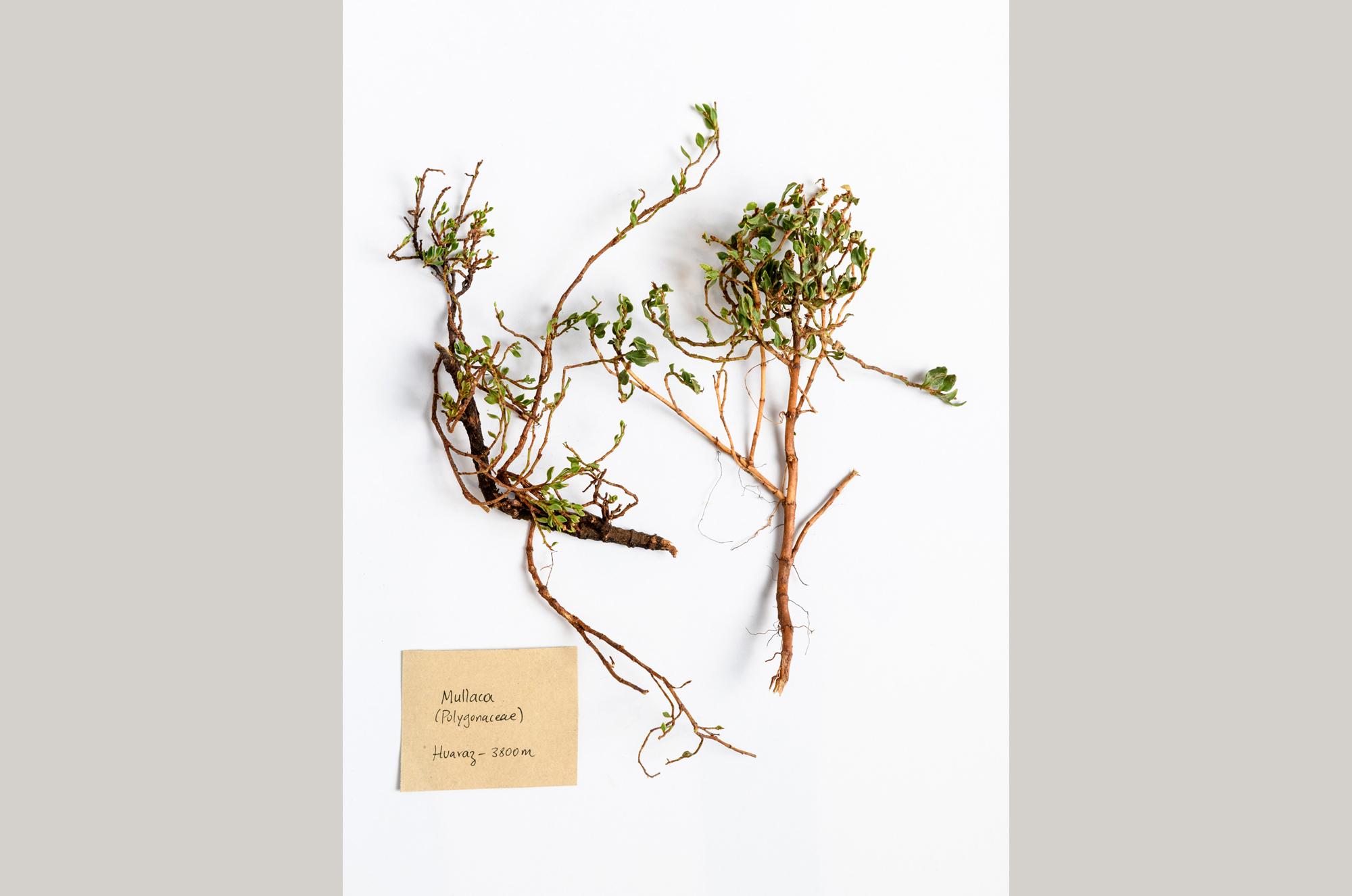 muestrario-plantas-1