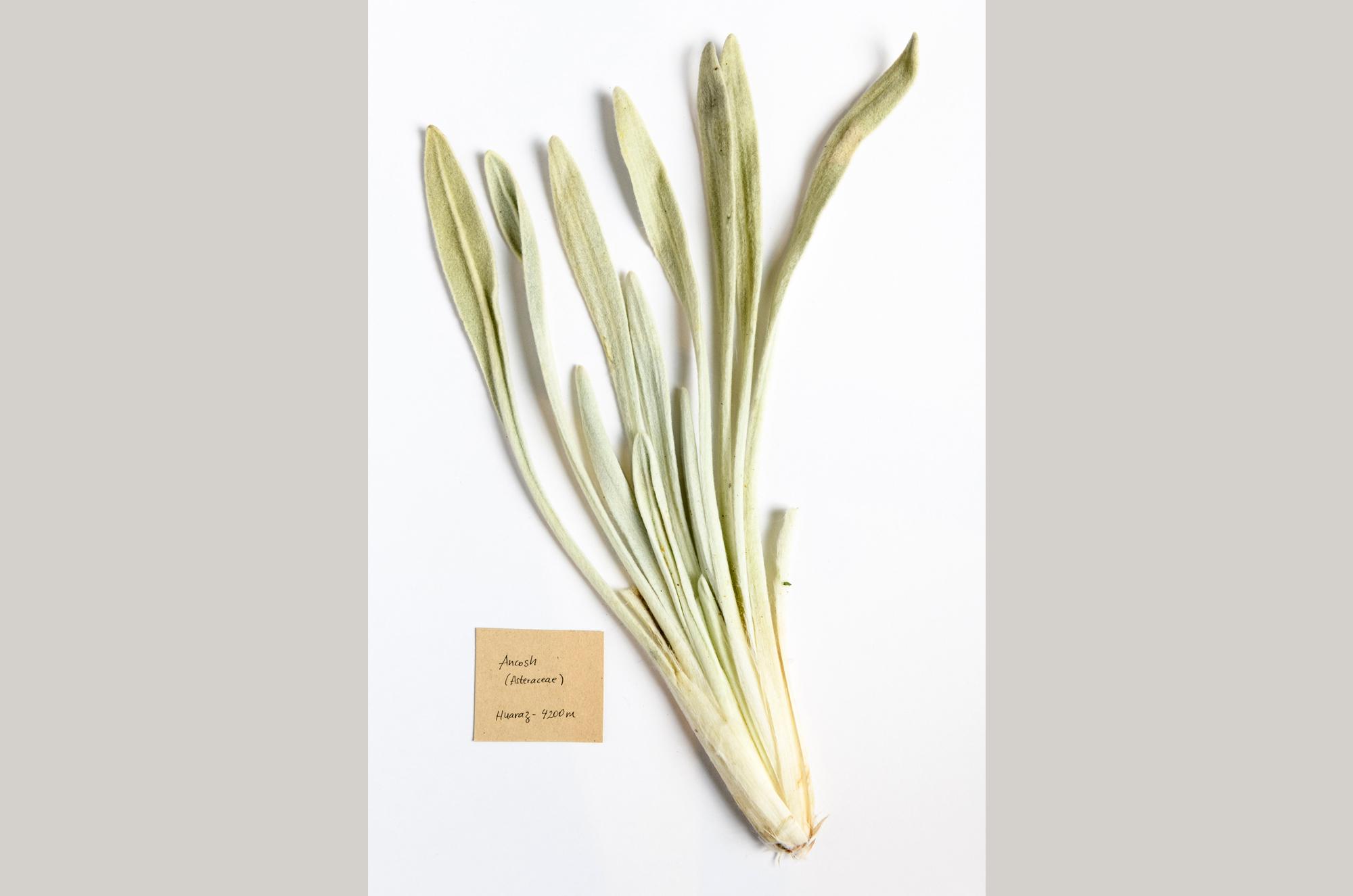 muestrario-plantas-4